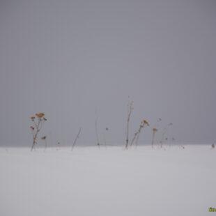 Inverno : freddo & neve